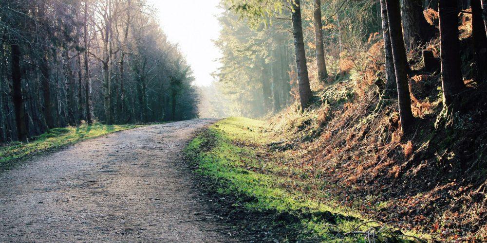 200 millones de euros para el sector forestal gallego