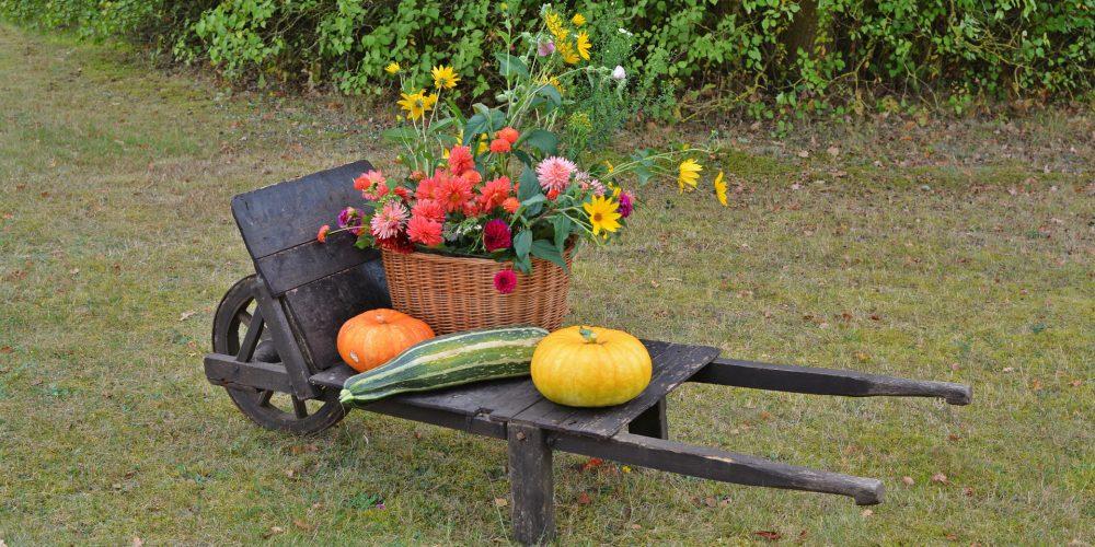 En otoño el jardín también necesita cuidados