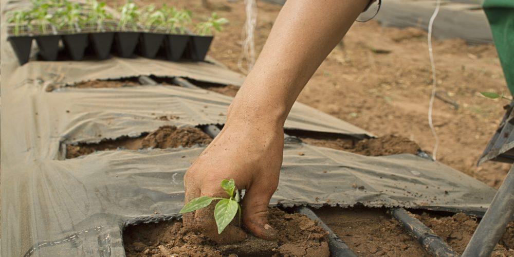 Hacienda cobró de más a la mitad de los nuevos agricultores