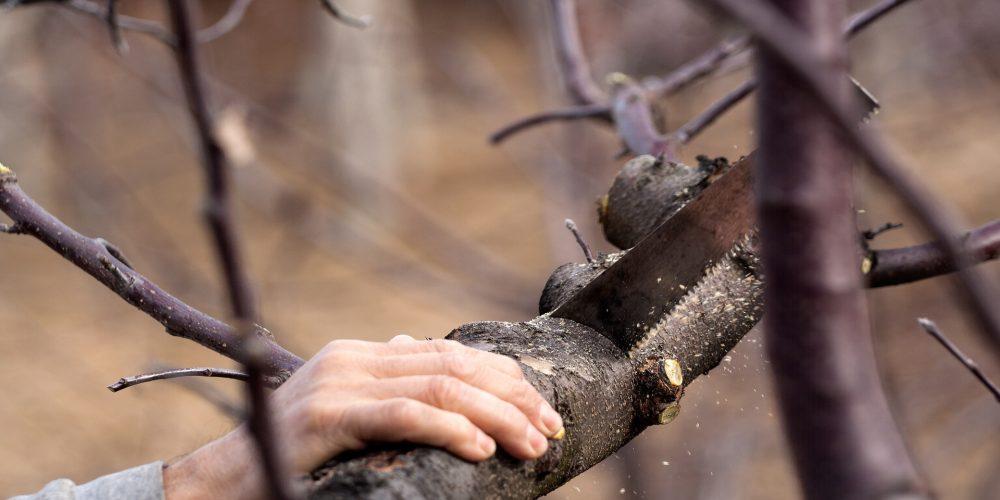 La Diputación formará mano de obra para los sectores ganadero y forestal