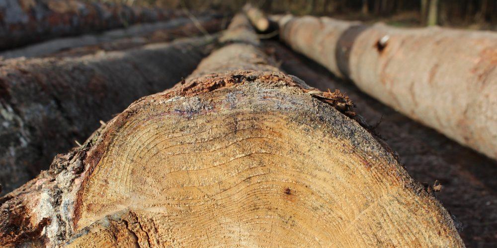 El sector forestal se da cita en Galiforest que se celebra del 28 al 30 de junio