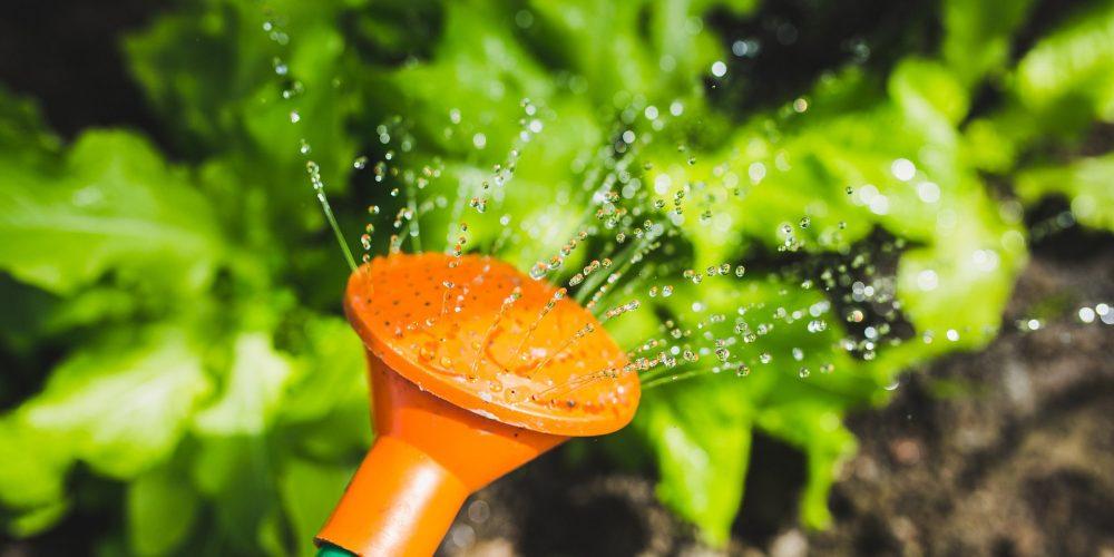 La importancia del riego para el huerto en julio