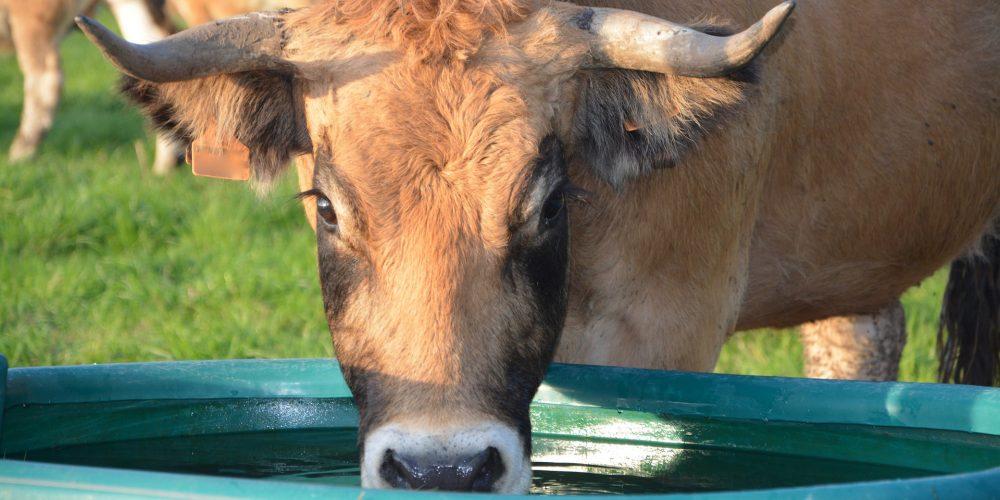 Las ayudas para garantizar el suministro de agua a las explotaciones agrarias se resolverán en próximos días