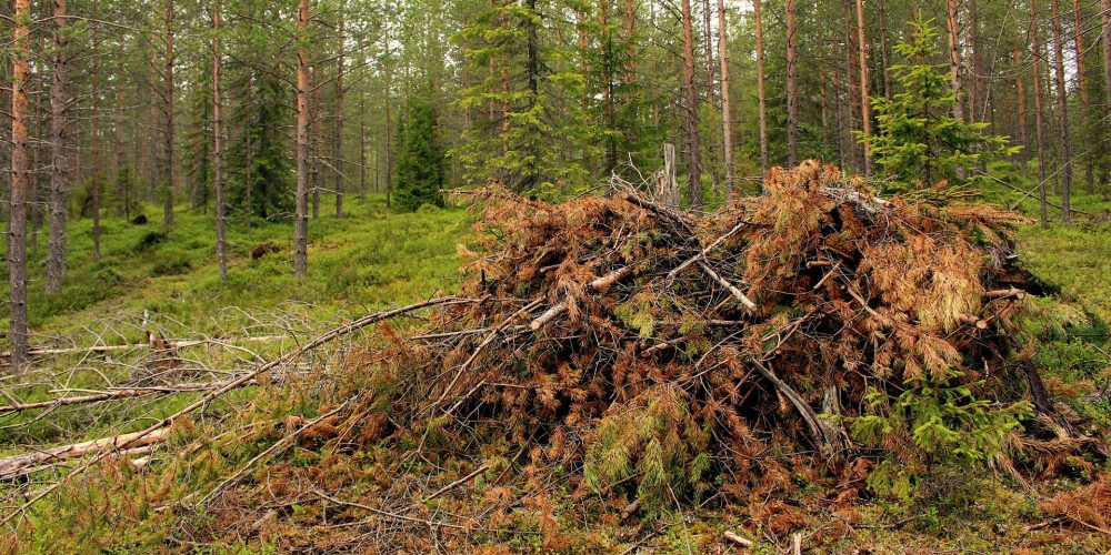 Normativa automática sobre la limpieza del monte para prevenir incendios forestales