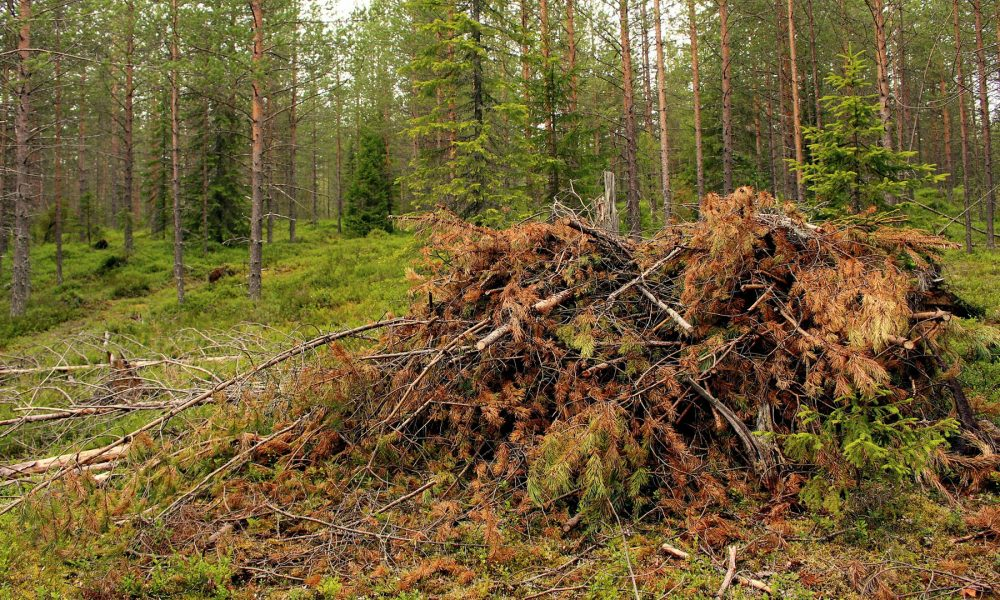 normativa-autonomica-sobre-la-limpieza-del-monte-para-prevenir-incendios-forestales-1920
