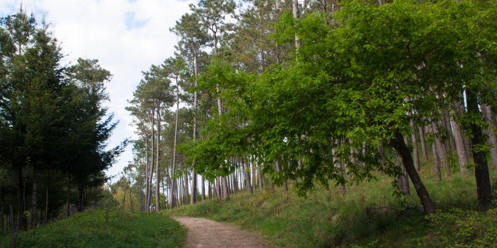 Pontevedra contará con 16 parques forestales