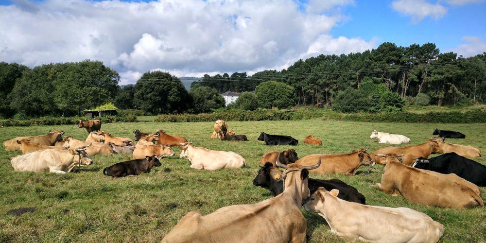 Recomendaciones para evitar el estrés por calor en las vacas