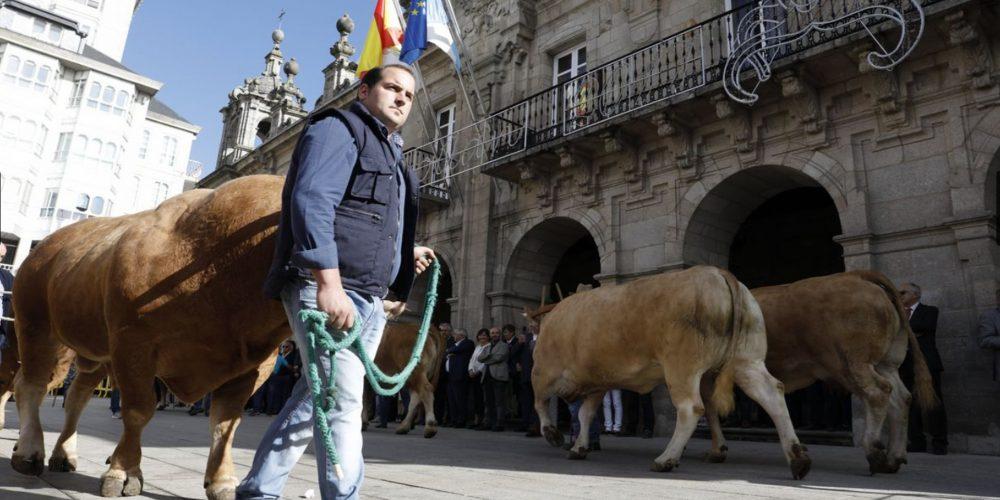 Desfile de ganado en San Froilán