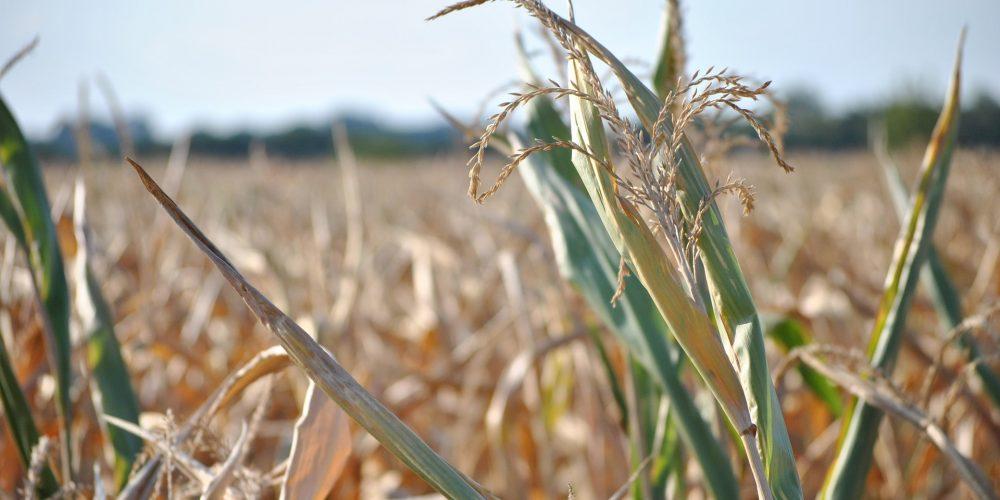 El precio de los seguros agrarios puede incrementarse hasta en un 100%