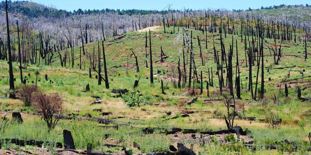 Cosas que hay que cambiar en la política forestal contra incendios