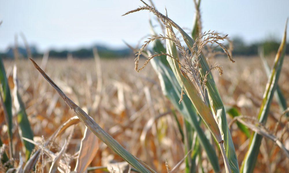 el precio de los seguros agrarios puede incrementarse hasta en un 100 por 100