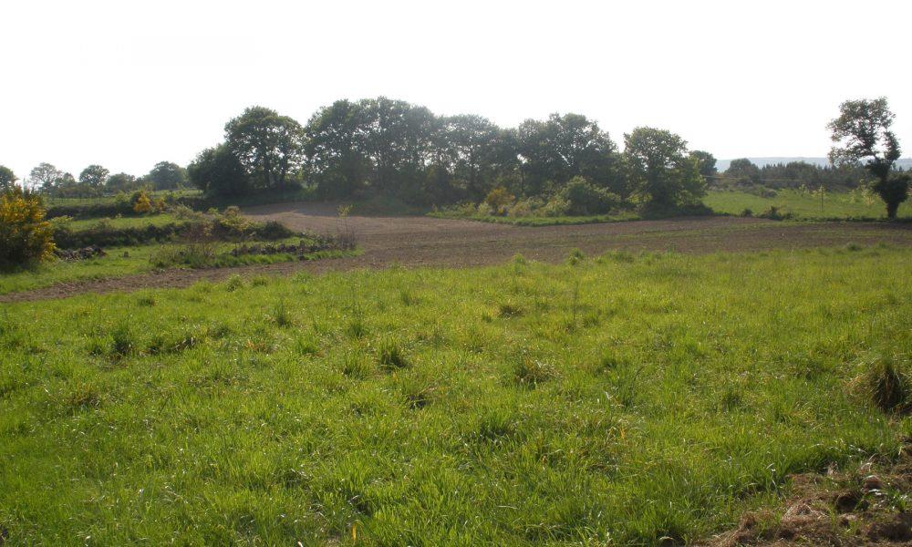 forestación de tierras agrícolas objetivo de granjas gallegas que dejan la actividad