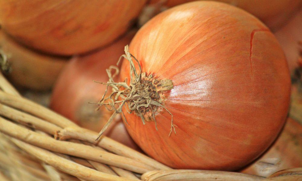 la cebolla caracteristicas nutricionales beneficios y tipos