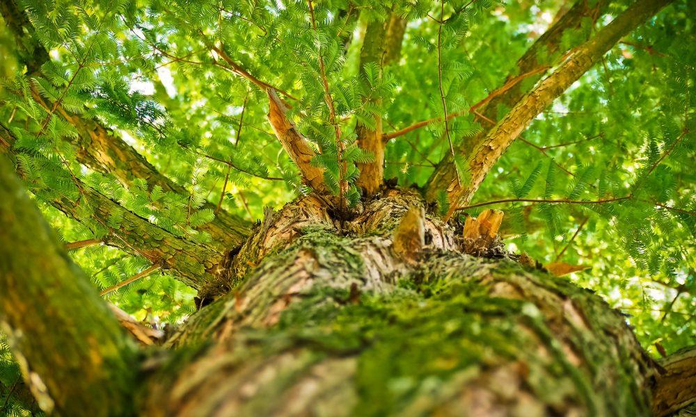 la-xunta-aprobara-un-plan-estrategico-para-el-sector-forestal-en-2018-1920