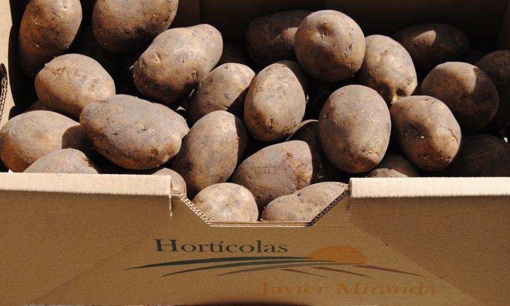 las-principales-variedades-de-patata-1920