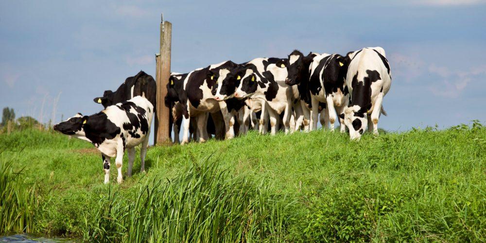 24 ganaderías de Deza y Tabeirós-Montes consiguen distinciones de la Fefriga