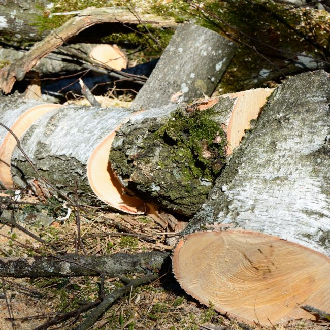 Ayudas para maquinaria forestal