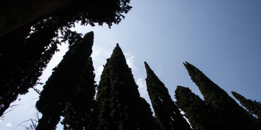 ¿Por qué hay cipreses en el cementerio?