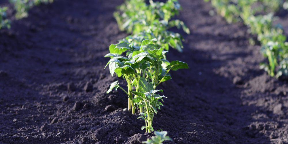 Definición y principios de la agroecología