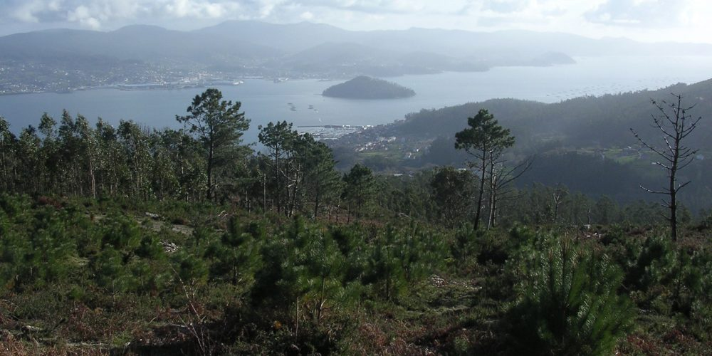 El Concello de Pontevedra organiza una jornada para analizar el futuro de los montes de la provincia