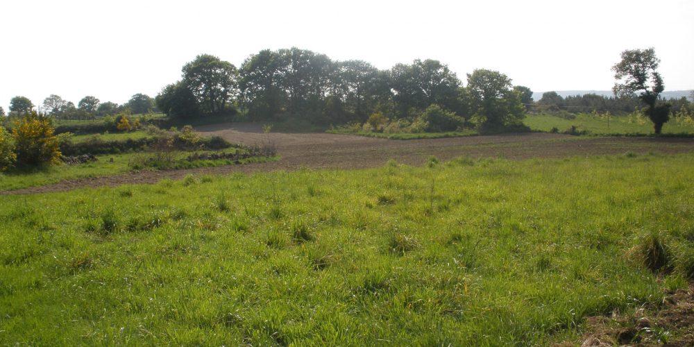 Forestación de tierras agrarias: objetivo del 14% de granjas gallegas que dejan la actividad