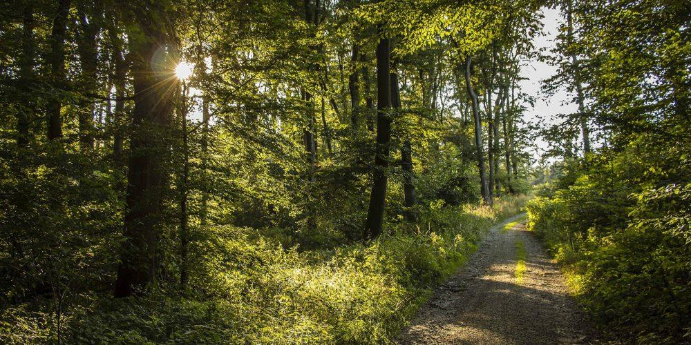 Galicia, referente en la lucha contra los incendios forestales
